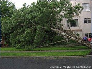 090604_tree_down
